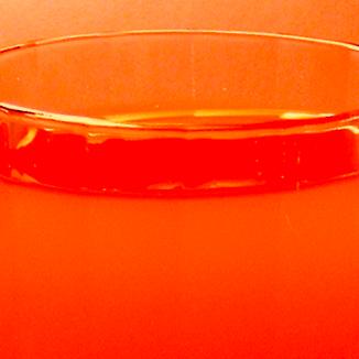 Sunshine Cocktail